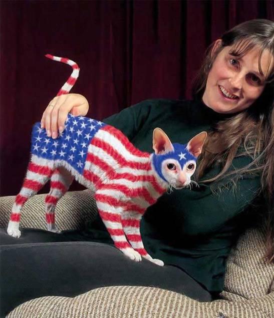 america-family-photo-cat